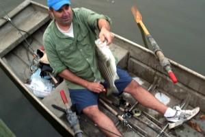 Mike Mryzglod catches a striper in Crabbe Creek